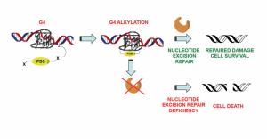 Quá trình Chlorambucil